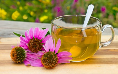 Echinacea for herpes das costas